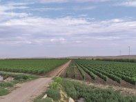 Potenţialele tranzacţii cu terenuri agricole sunt în creştere, dar tranzacţiile reale sunt în stand by din motive legislative. În 2021 doar două terenuri de peste 30 ha s-au vândut