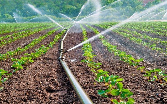 Norofert, producătorul de îngrăşăminte organice cotat la Bursă, raportează pentru 2020 afaceri de 24 de mil. de lei, în creştere cu 64% faţă de anul anterior, şi un profit net de 6,3 mil. de lei