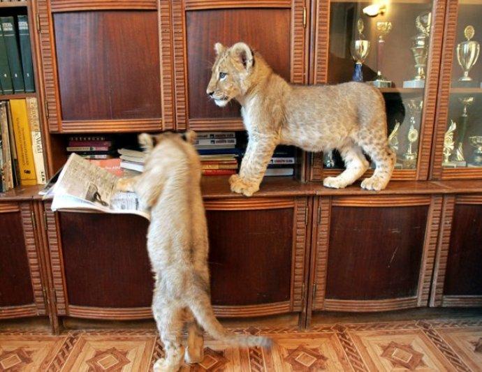Imagini pentru imagini cu animale de companie excentrice