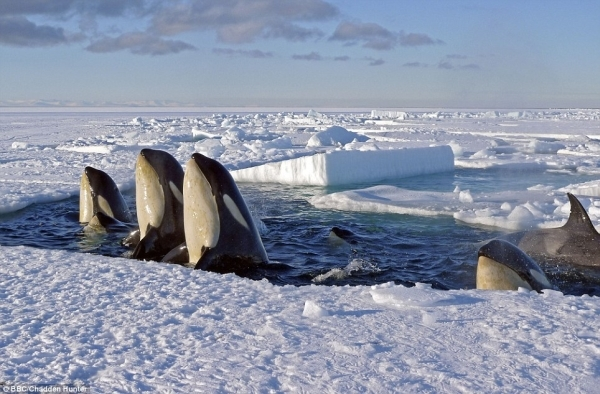Planeta îngheţată O Galerie Foto Cu Imagini Spectaculoase