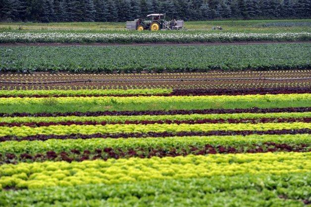 Măsura luată de ministrul bulgar al Agriculturii în favoarea producătorilor locali de fructe şi legume