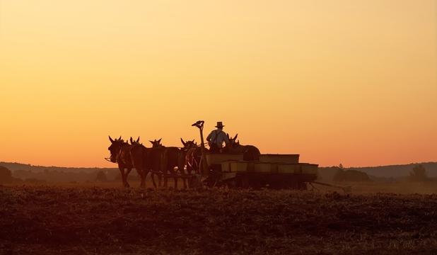 Comunităţile Amish – între legende urbane şi adevăr