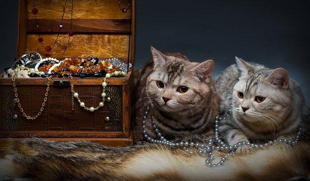 Cele mai scumpe pisici din lume