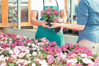 De ce sunt florile atat de scumpe? Romanii platesc de trei ori mai mult decat olandezii pe un trandafir